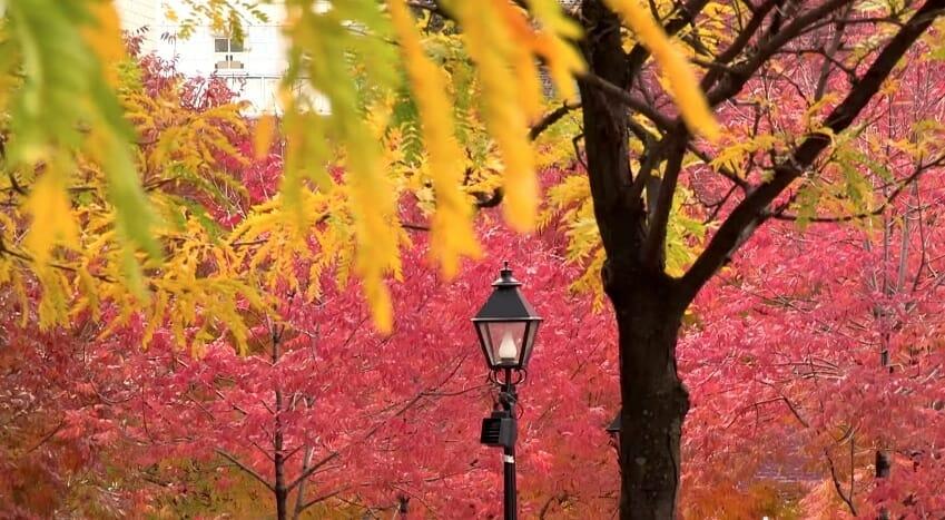 couleur automne montréal