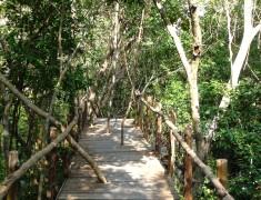 passerelle en bois koh tao thailande