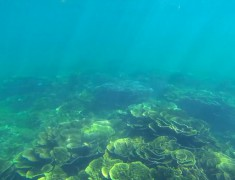 Coraux coral bay australie