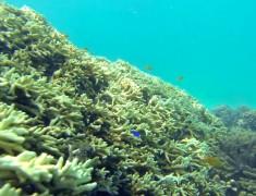 coraux exmouth australie