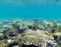 poissons tropicaux exmouth cap range australie