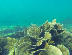 road trip australie coral bay