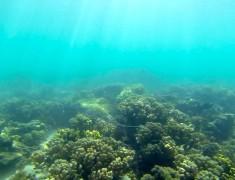 snorkeling cap range parc national australie