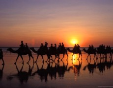 dromadaires coucher de soleil broome