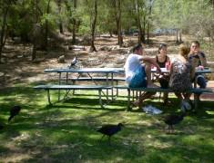 picnic partir en autralie