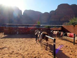 cheval jordanie wadi rum