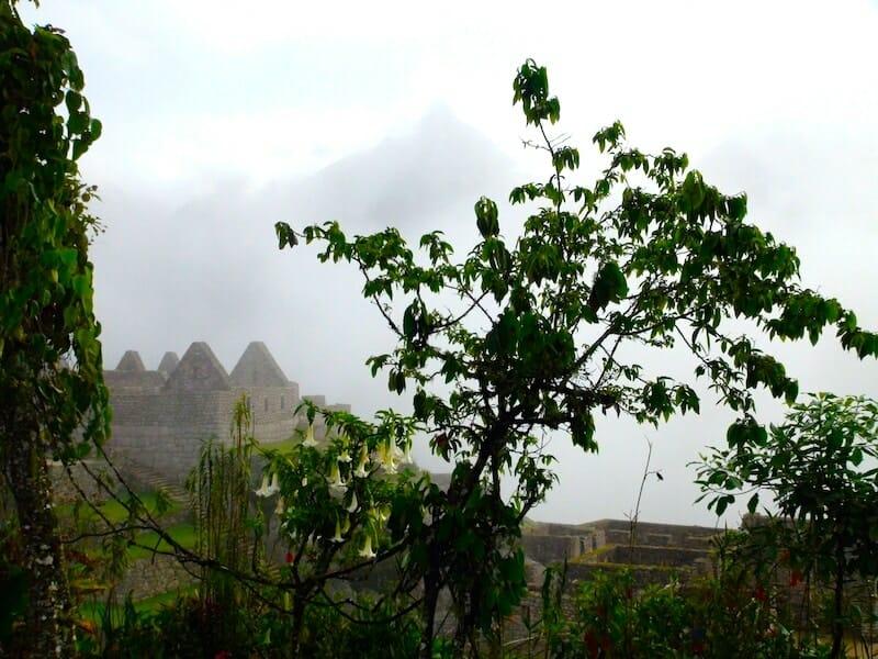 vegetation presente sur le machu picchu