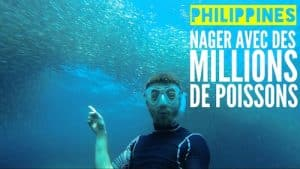 moalboal philippines sardines