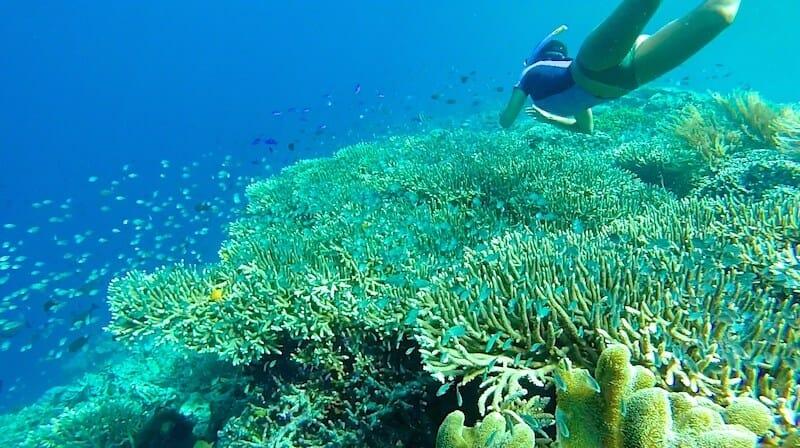 Bunaken top plongee indonesie