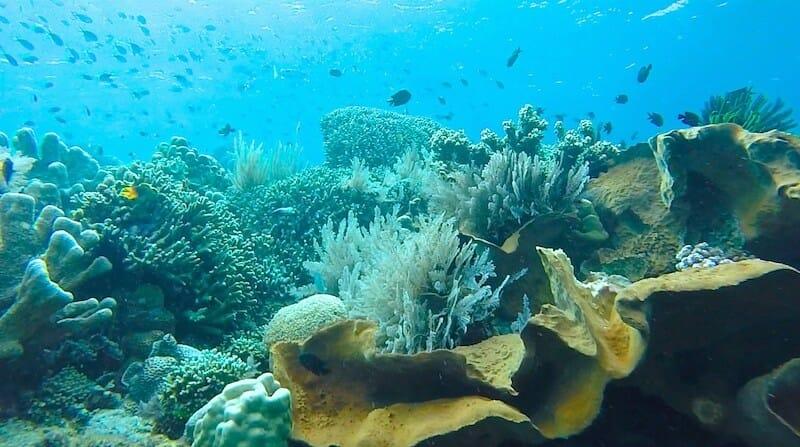 bunaken indonesie plongee sulawesi