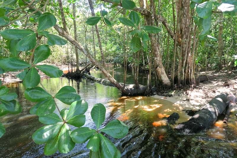 parc national cahuita costa rica riviere