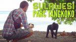 Parc Tangkoko en Sulawesi : voir des animaux rares presque à coût sûr